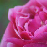 January Rose 1/52