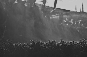 Steaming Hedge after self-editing process
