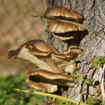Weekly Photo 8/52 for 2013: Fungi